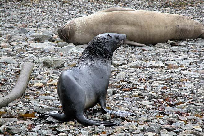 На острове обитают три десятка человек и огромная популяция тюленей