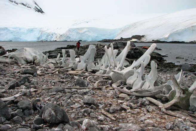 Могучий скелет лежит недалеко от британской базы Порт Локрой