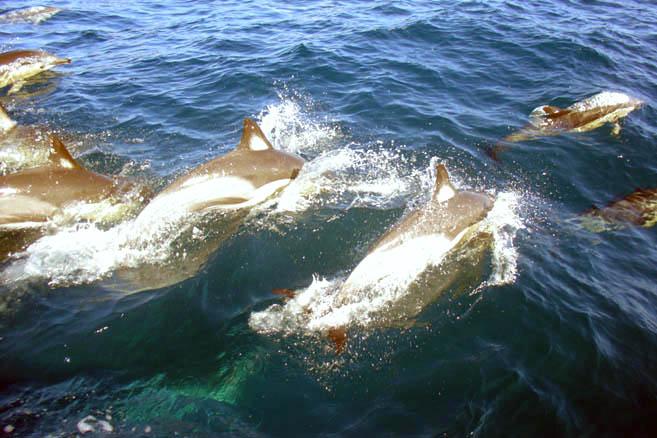 Вместо китов теперь дельфины
