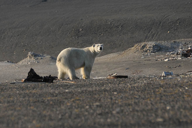 Погоня за медведем продолжалась 10 минут