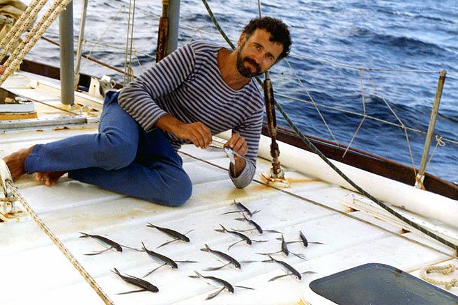 Летучие рыбы
