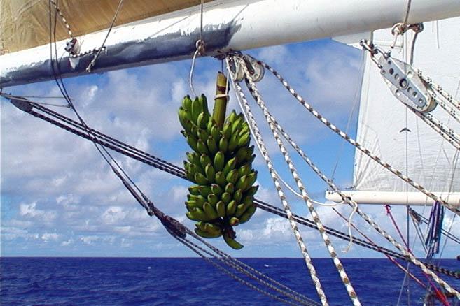 Бананы дозревают