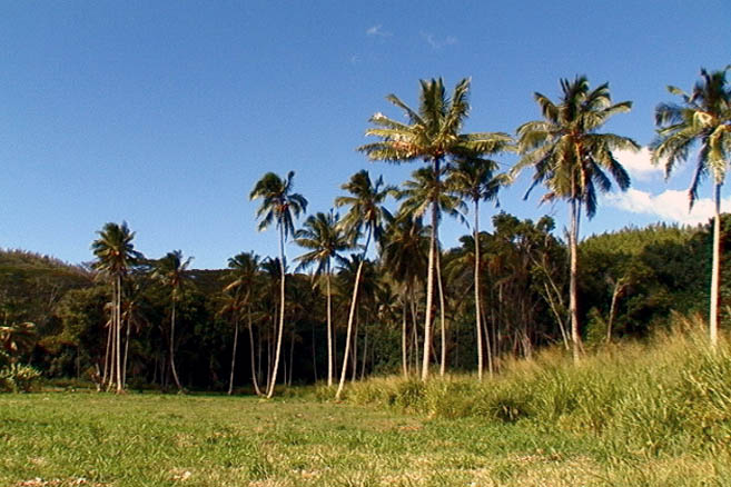 Бананово-кокосовая роща