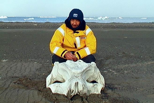 Огромный череп неизвестного животного