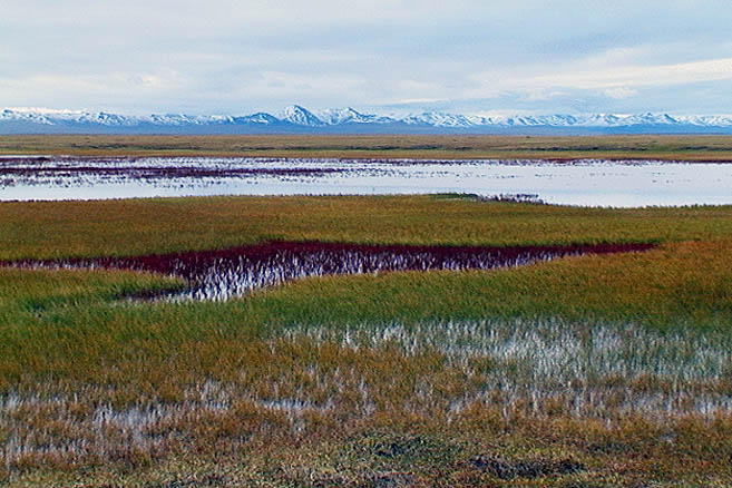 Аляскинская тундра