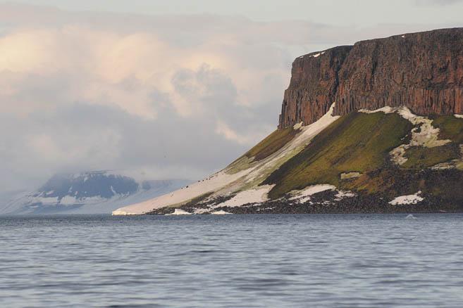 Остров Циглера. Мох растет прямо на льду