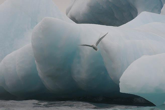 Айсберг № 3 и птичка