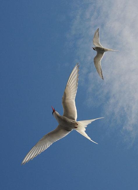 Птички в Кросс-фьорде