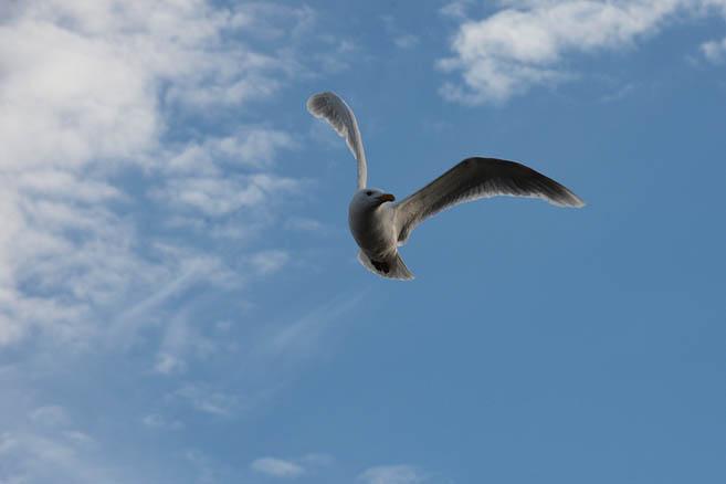 Фотограф любит птичек