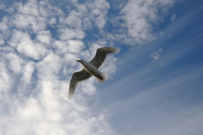 Фотограф снова любит птичек