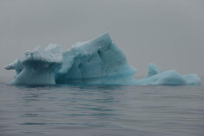 Фотограф любит айсберги