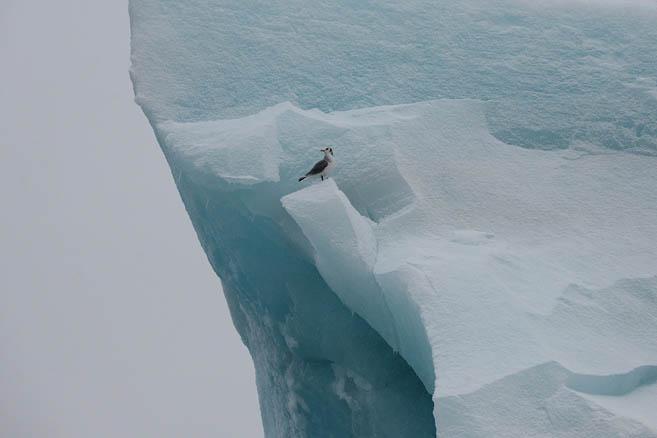 Фотограф любит айсберги и птичек