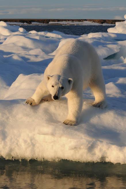Фотограф любит медведей