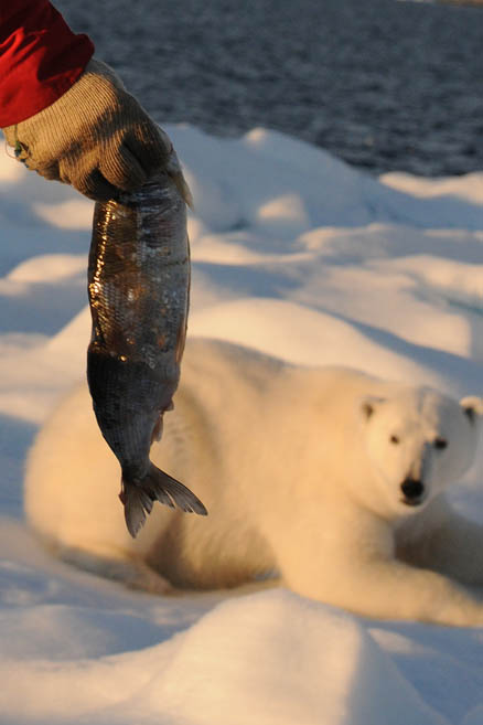Медведи любят рыбу