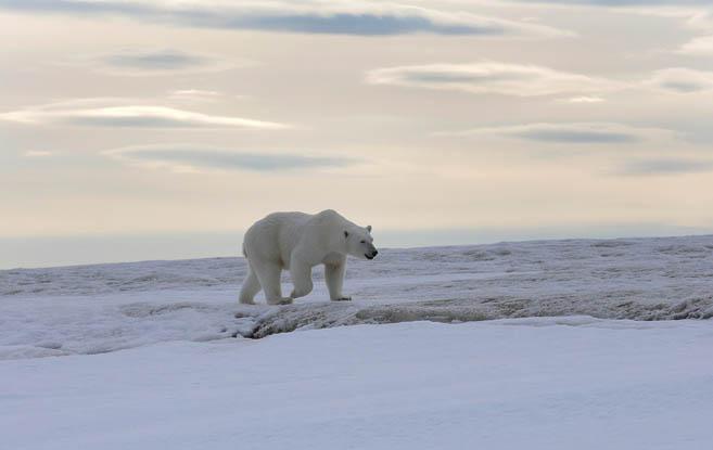 Фотограф еще больше любит медведей