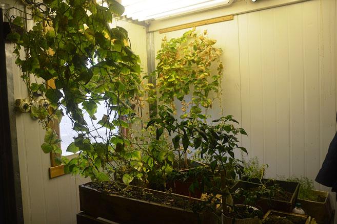 Ботанический сад 79-й широты