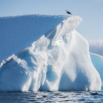 Айсберги и птички